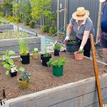 Spring Gardening at Highfields - Community Garden_02_WL