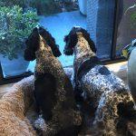 GemLife's furbulous pet pals