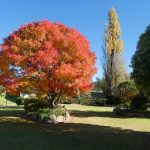 GemLife Highfields - Robyn Ernest- Autumn Colours